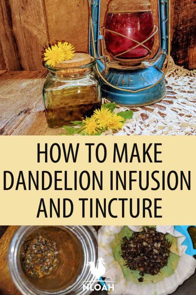 dandelion infusion Pinterest