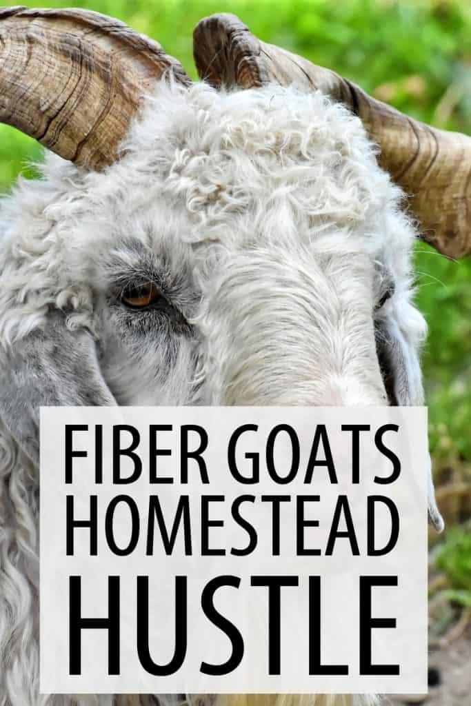fiber goats pinterest