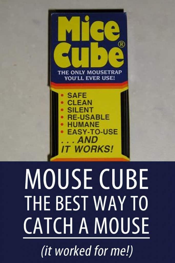 mouse cube Pinterest