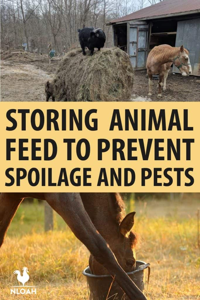 storing animal feed pinterest