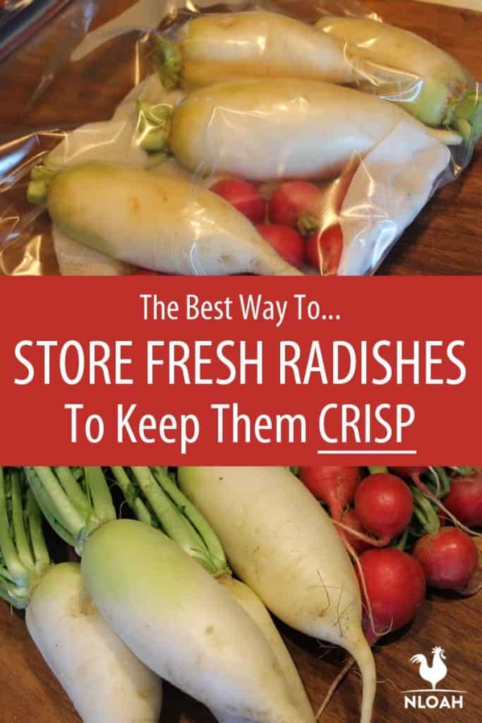 storing radishes Pinterest image