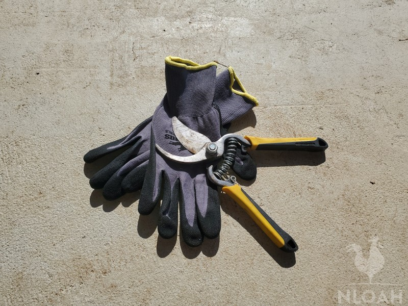 work gloves and pruning shears