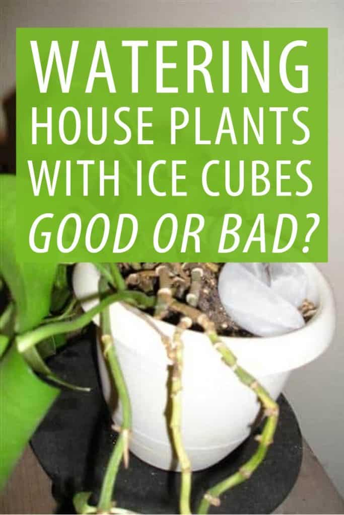 watering house plants Pinterest
