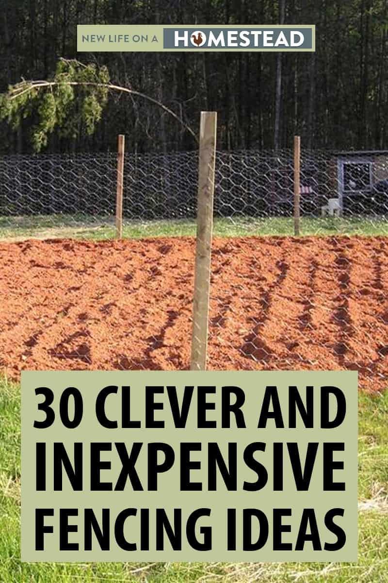cheap garden ideas Pinterest ideas
