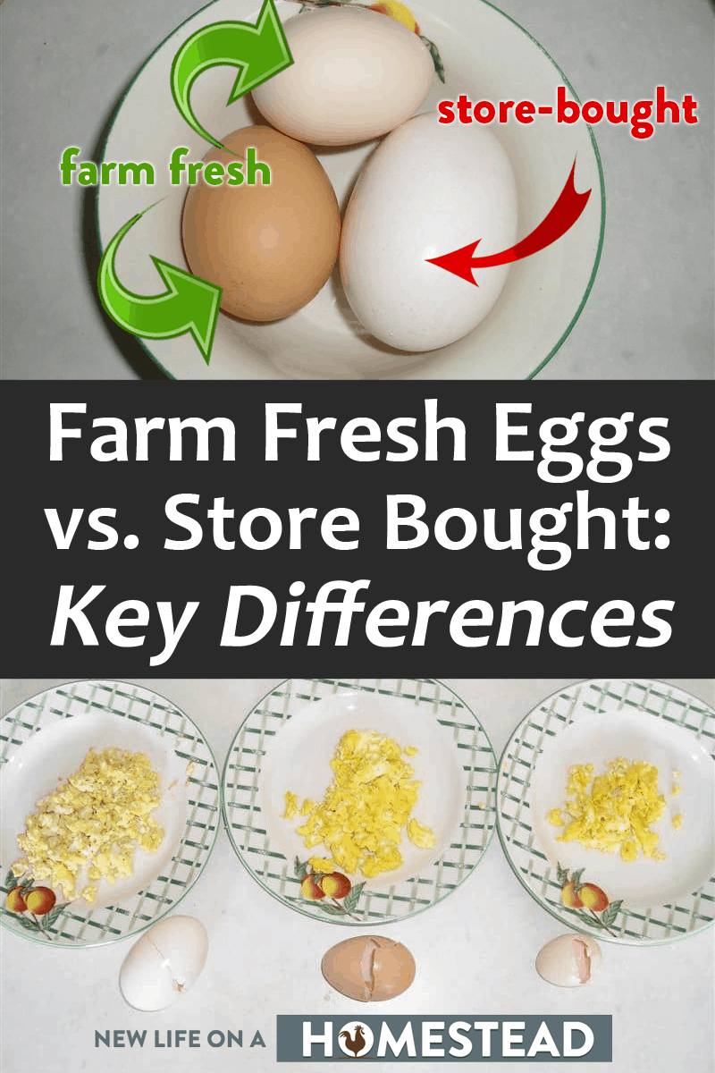 farm and store bought eggs pinterest