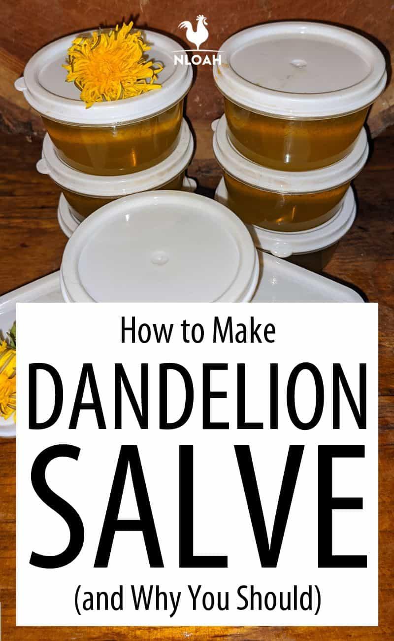 dandelion salve Pinterest