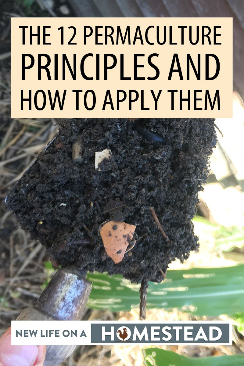 permaculture principles pinterest