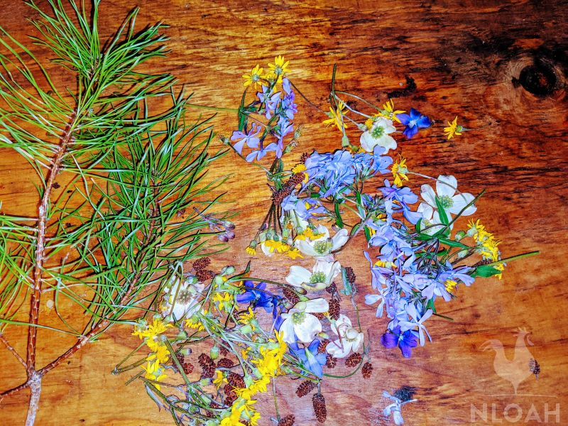 pine tree branch and harvested flowers