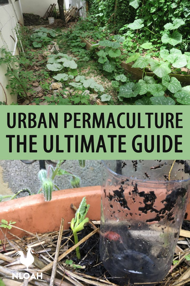 urban permaculture pinterest