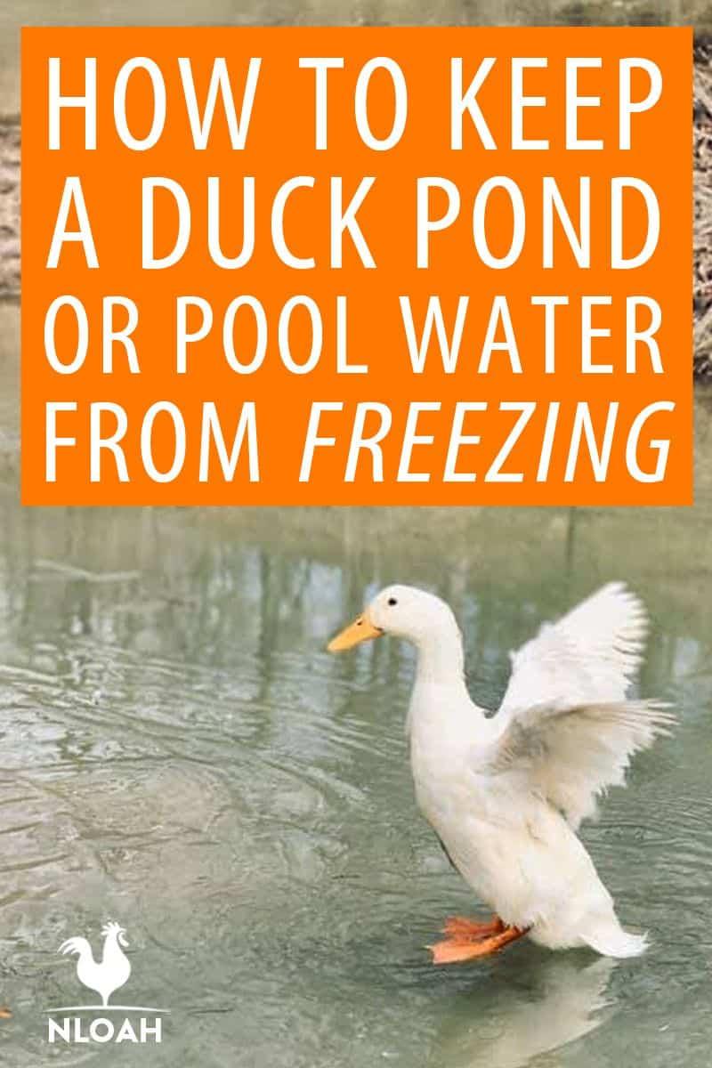 duck in pond pinterest