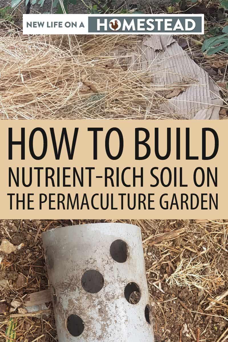 nutrient rich soil pinterest