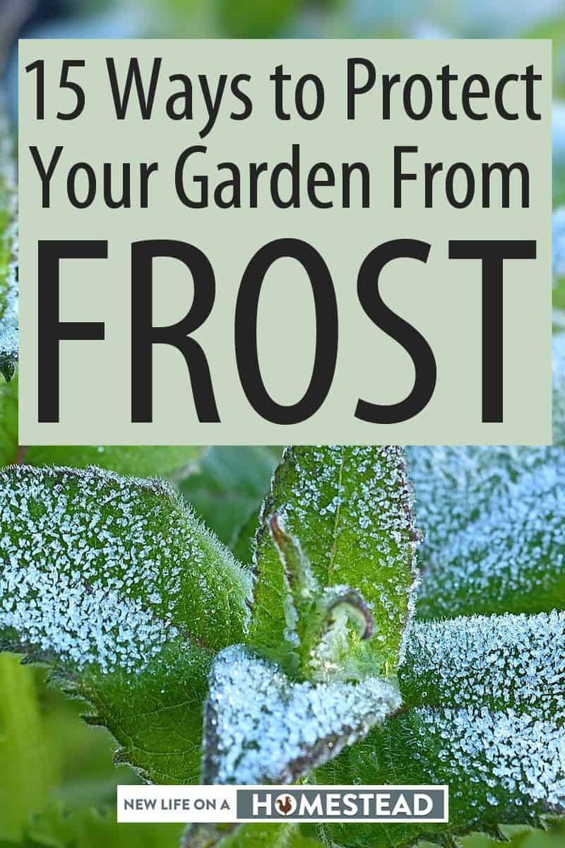 protecting garden from frost Pinterest