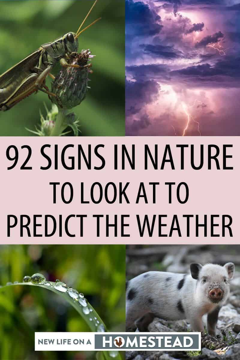 signs to predict weather Pinterest image