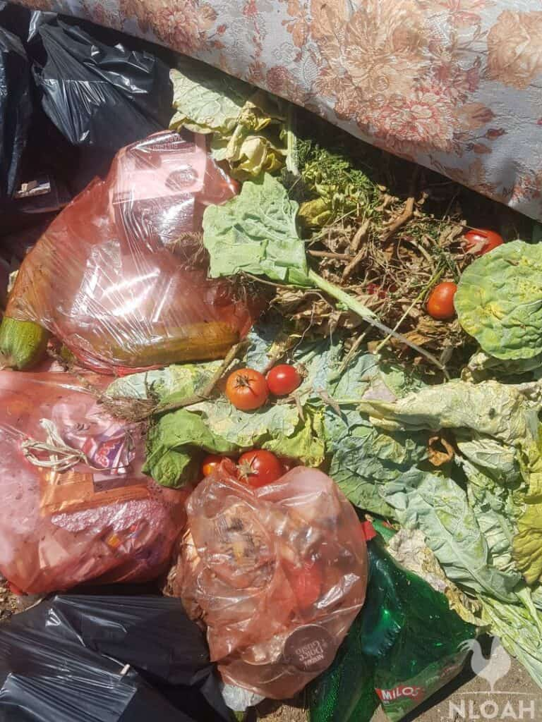 tomatoes and zucchini seeds in garbage