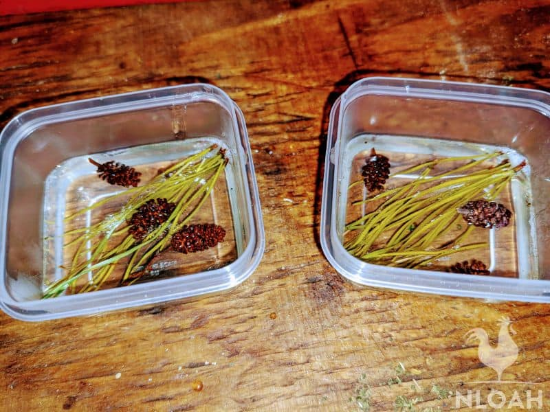 adding small pine cones to the glycerin mix