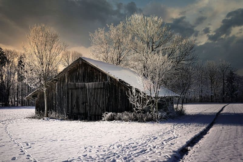 barn during the winter