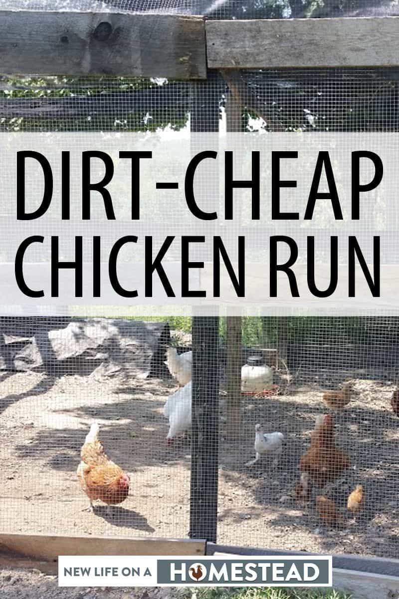 chicken run pinterest image 3