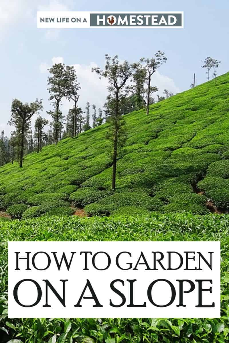 gardening on a slope pin image 2