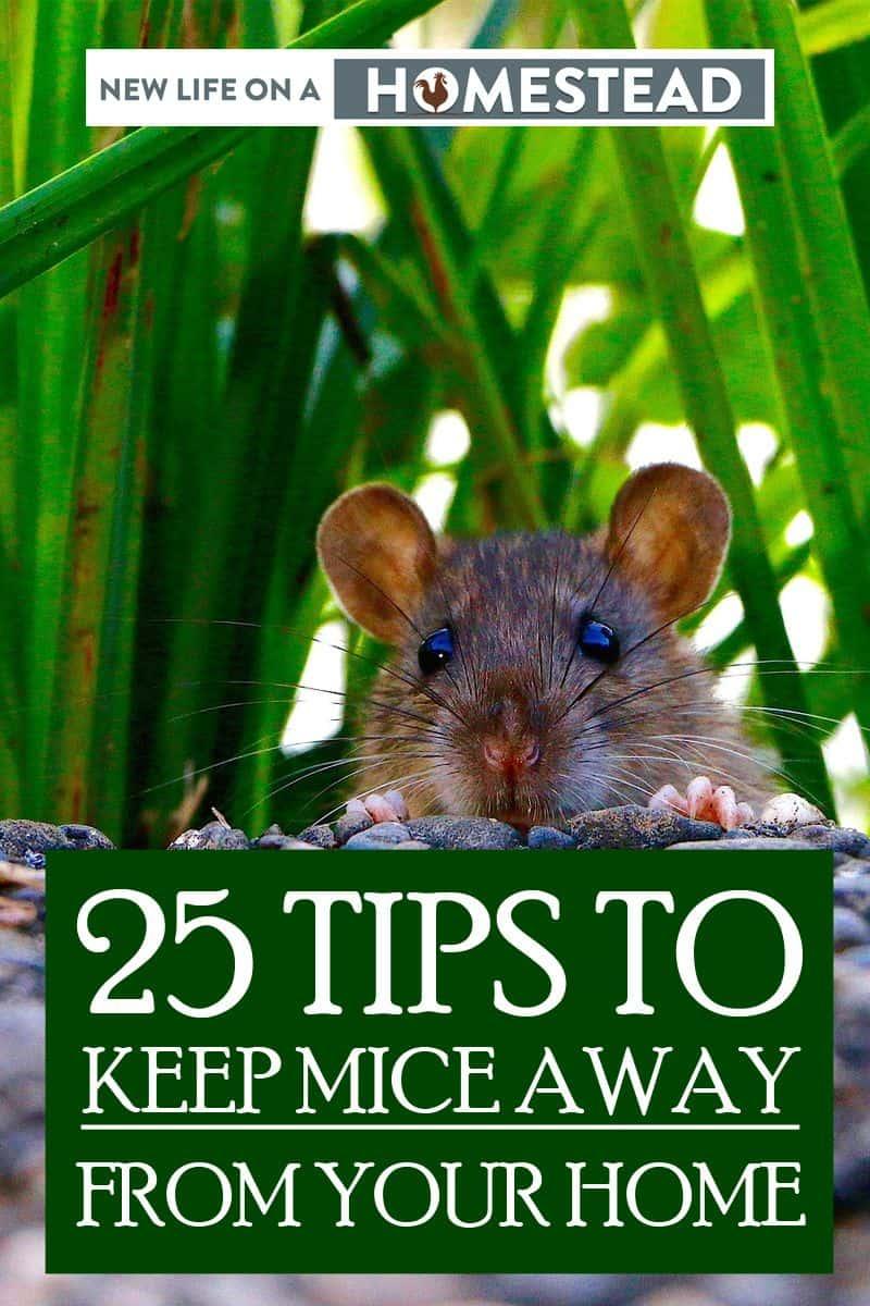 keeping mice away pinterest image 2