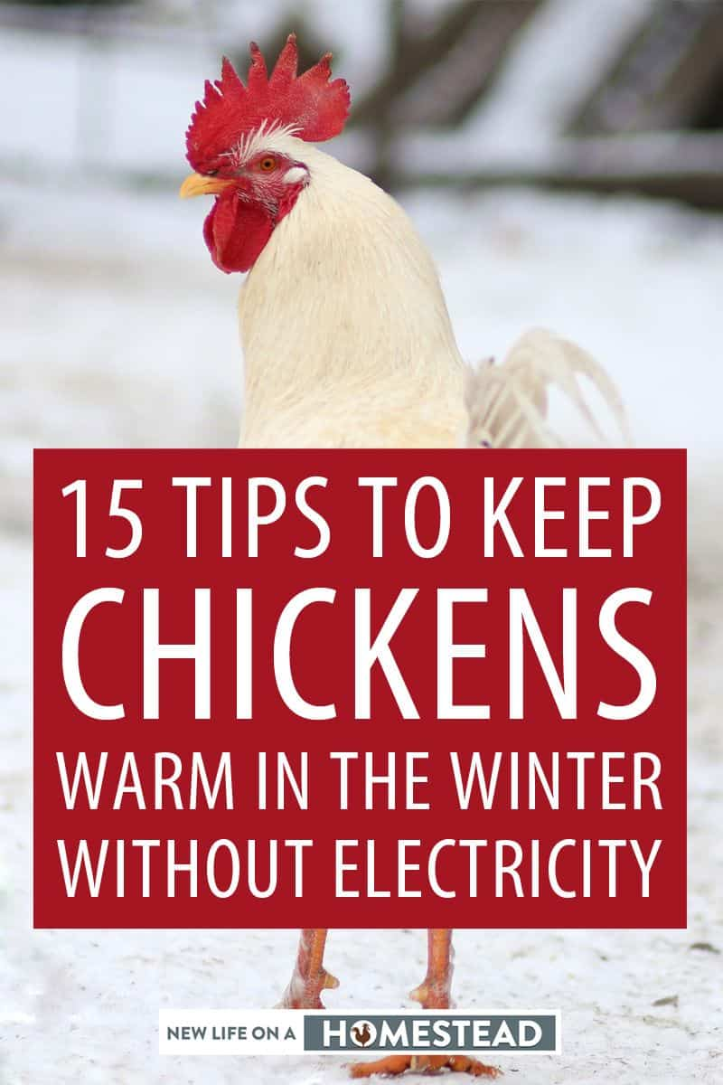 keep chicks warm without electricity pinterest