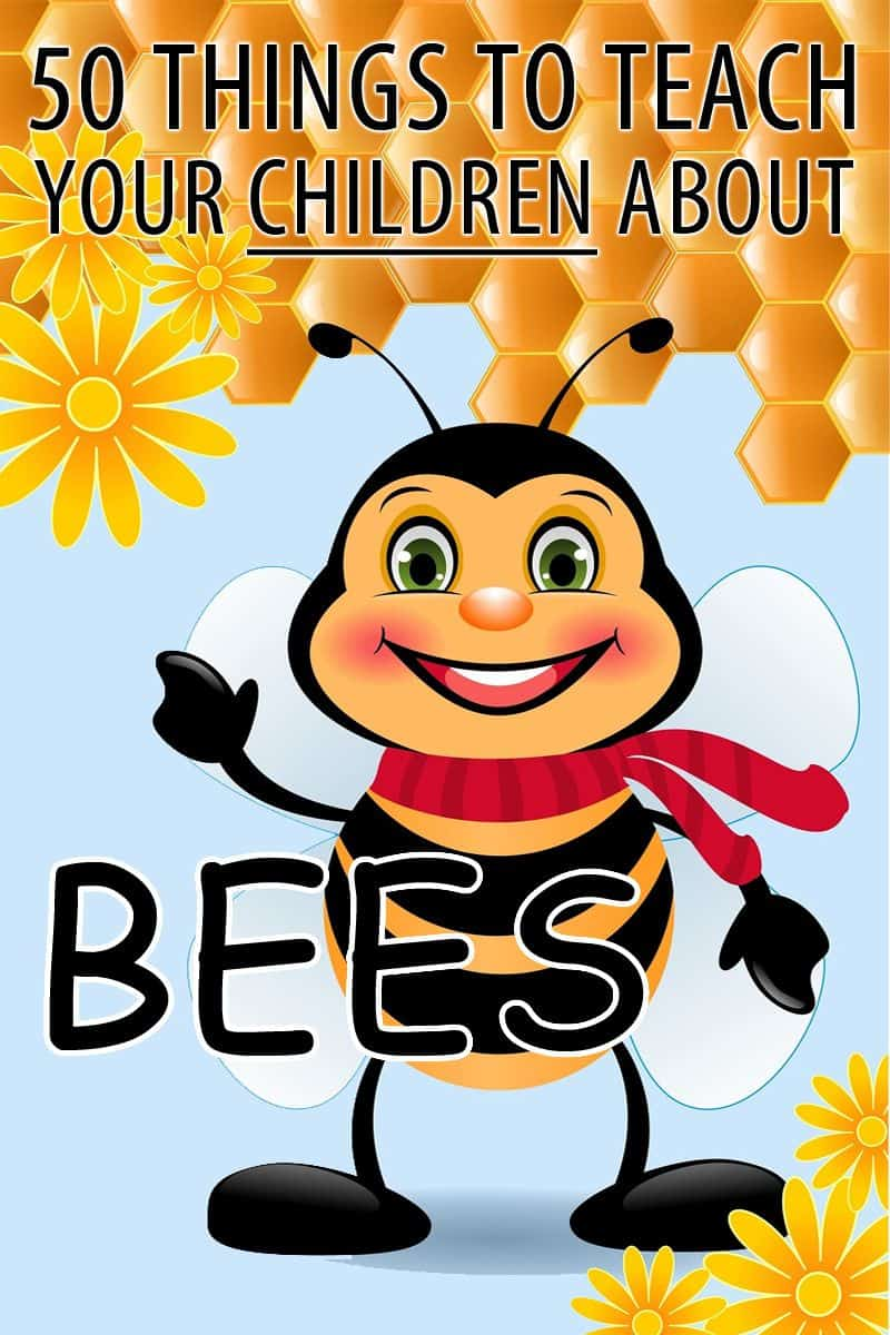 kids bees facts pinterest