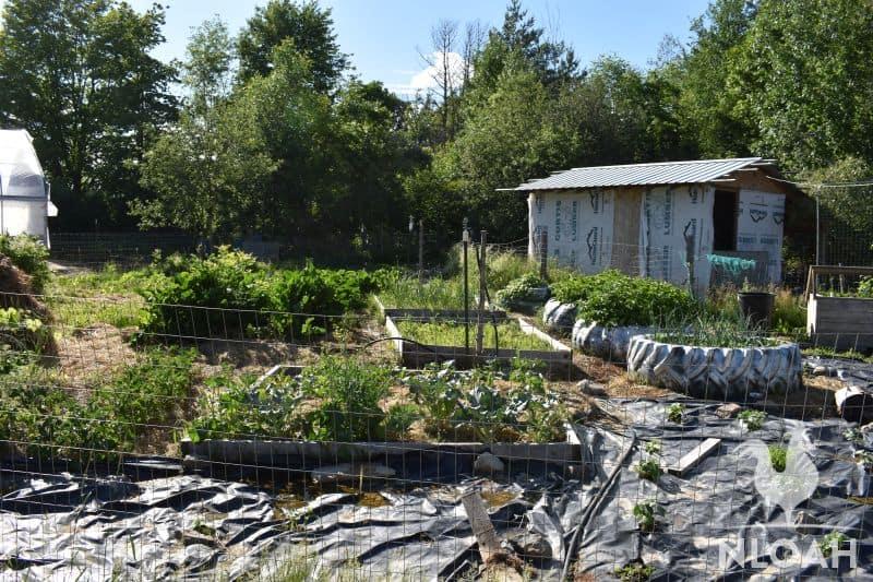 fence around veggie garden