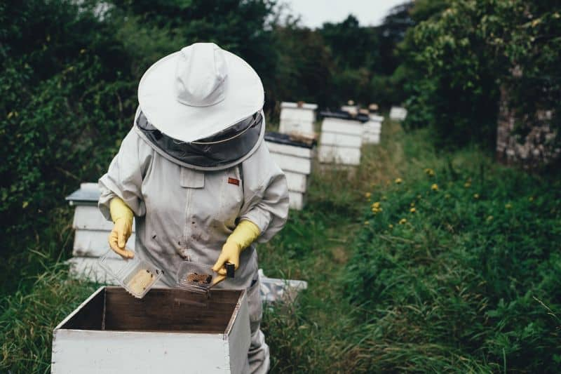 person inspecting beehive