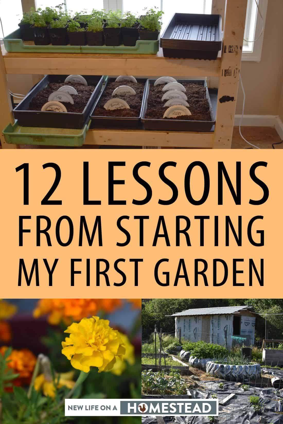 starting first garden pinterest