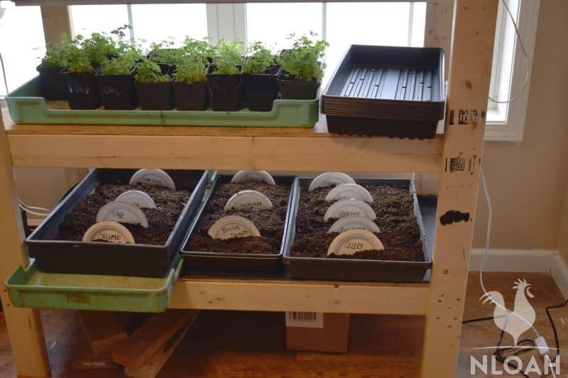 starting various garden seeds indoors
