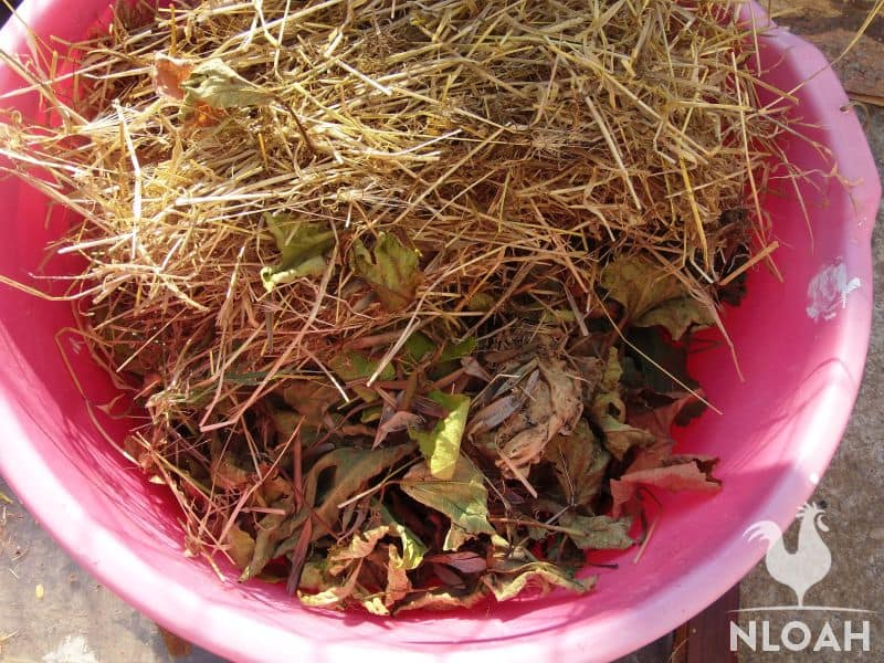 adding leaves and straw on top of soil in bucket
