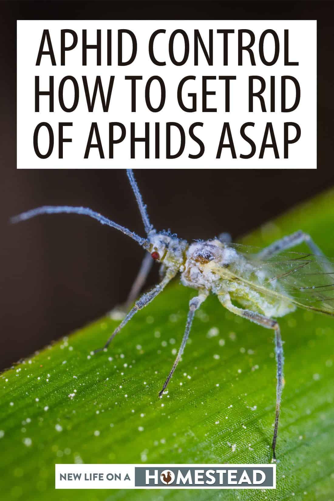 aphids pinterest