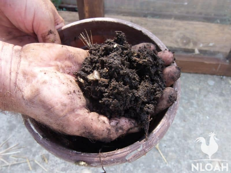 finished compost in hand