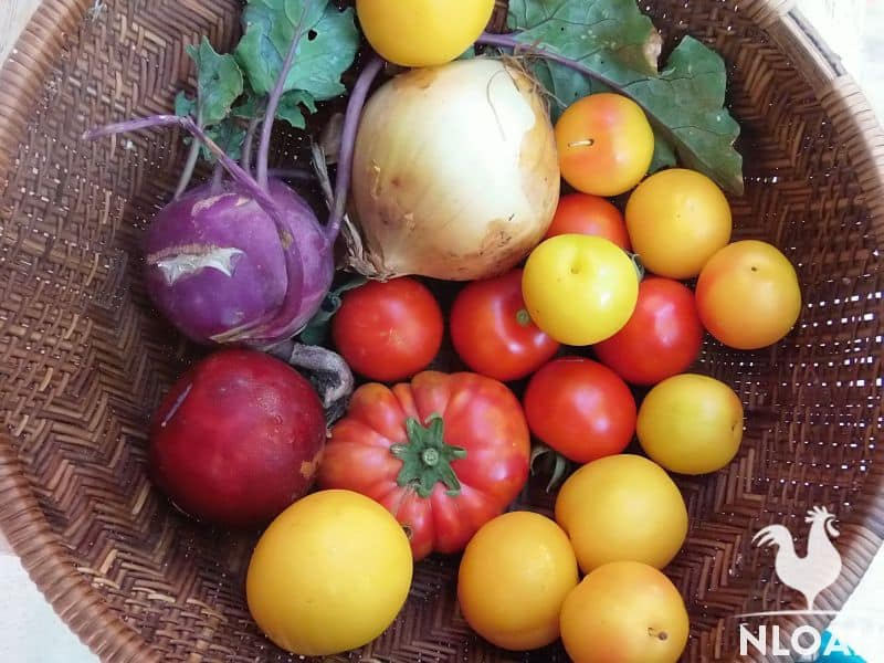 tomatoes and onions in basket