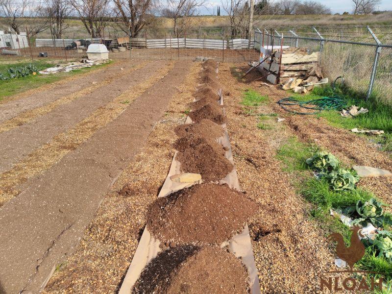 soil for no-till beds