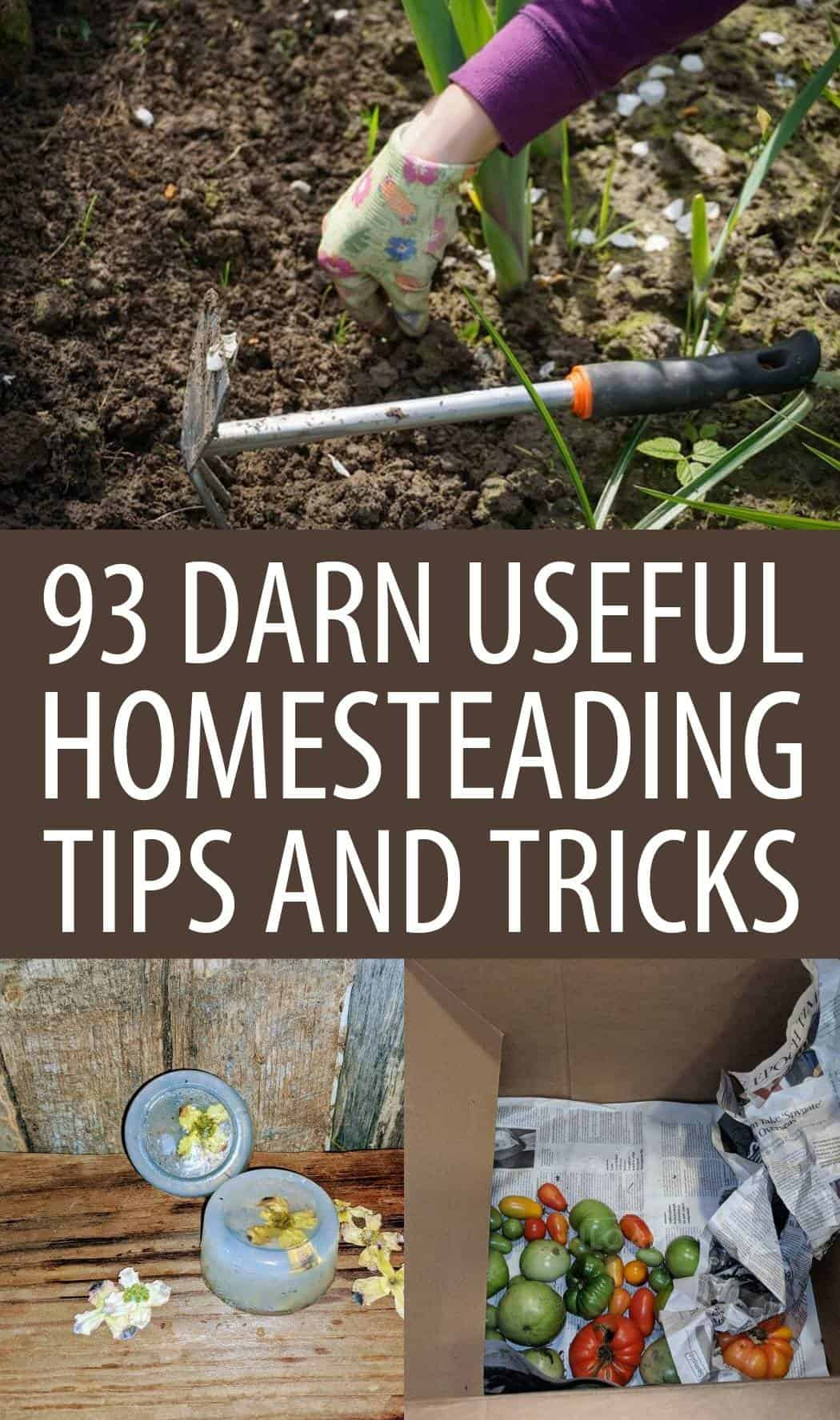homesteading tips and tricks