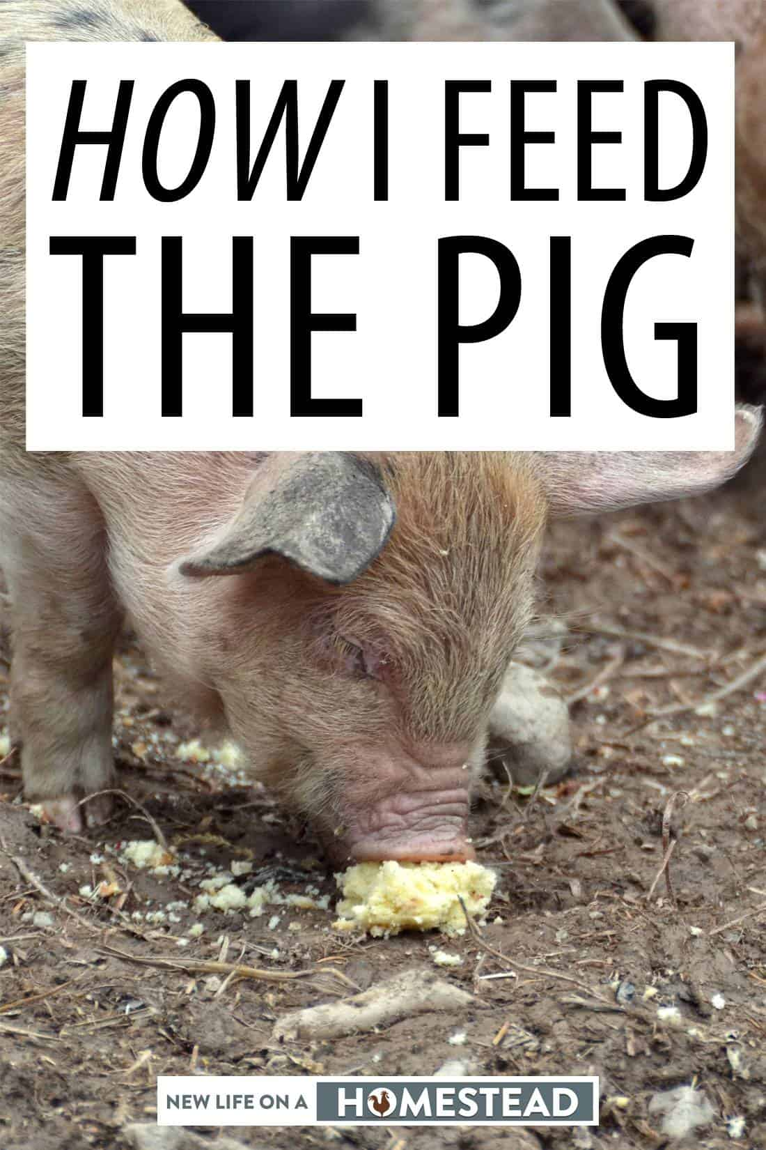 feeding the pig pin image