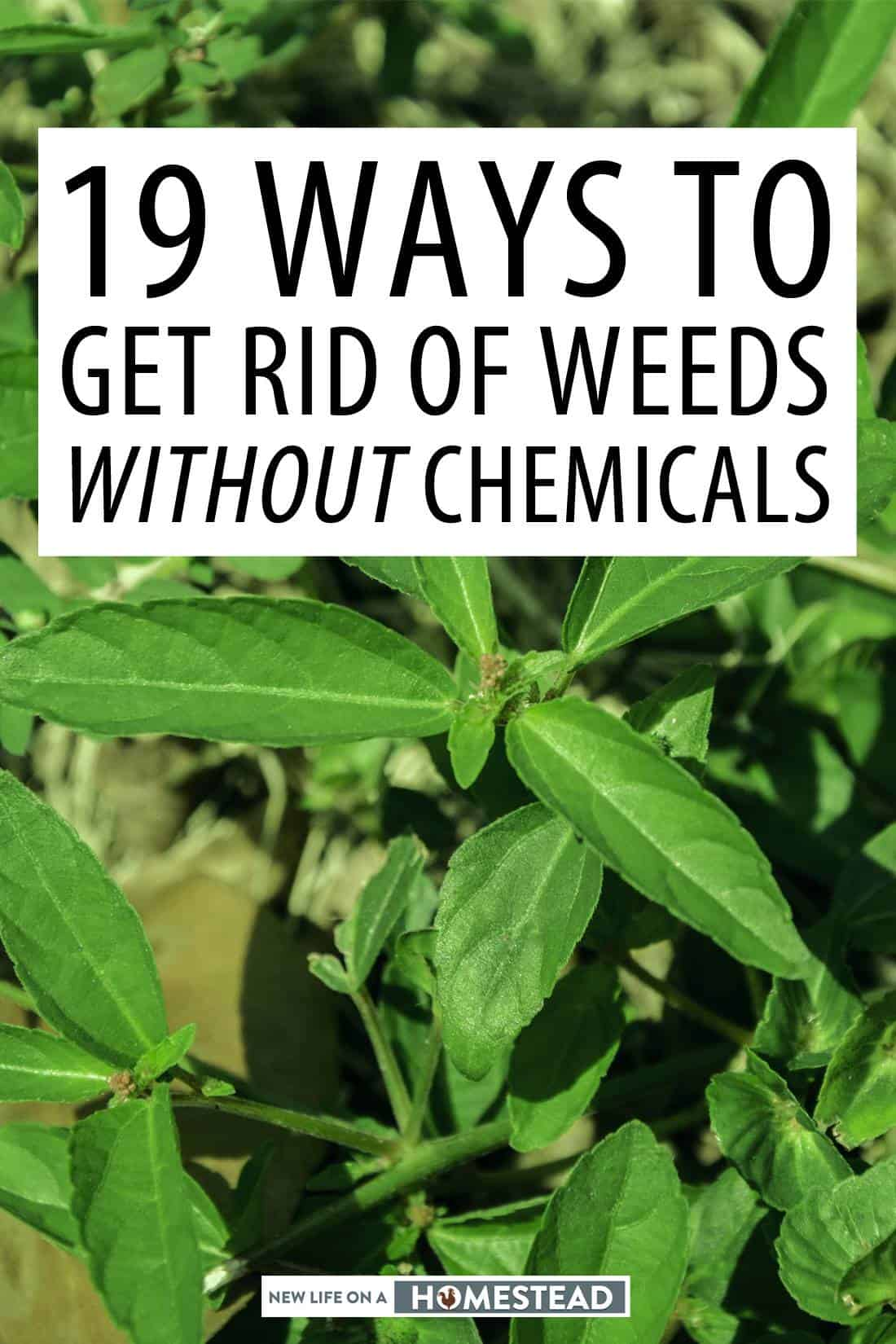 getting rid of weeds pinterest