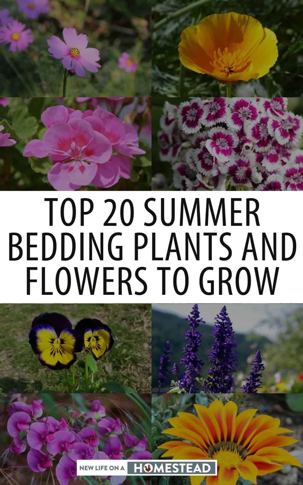 summer bedding flowers pinterest image