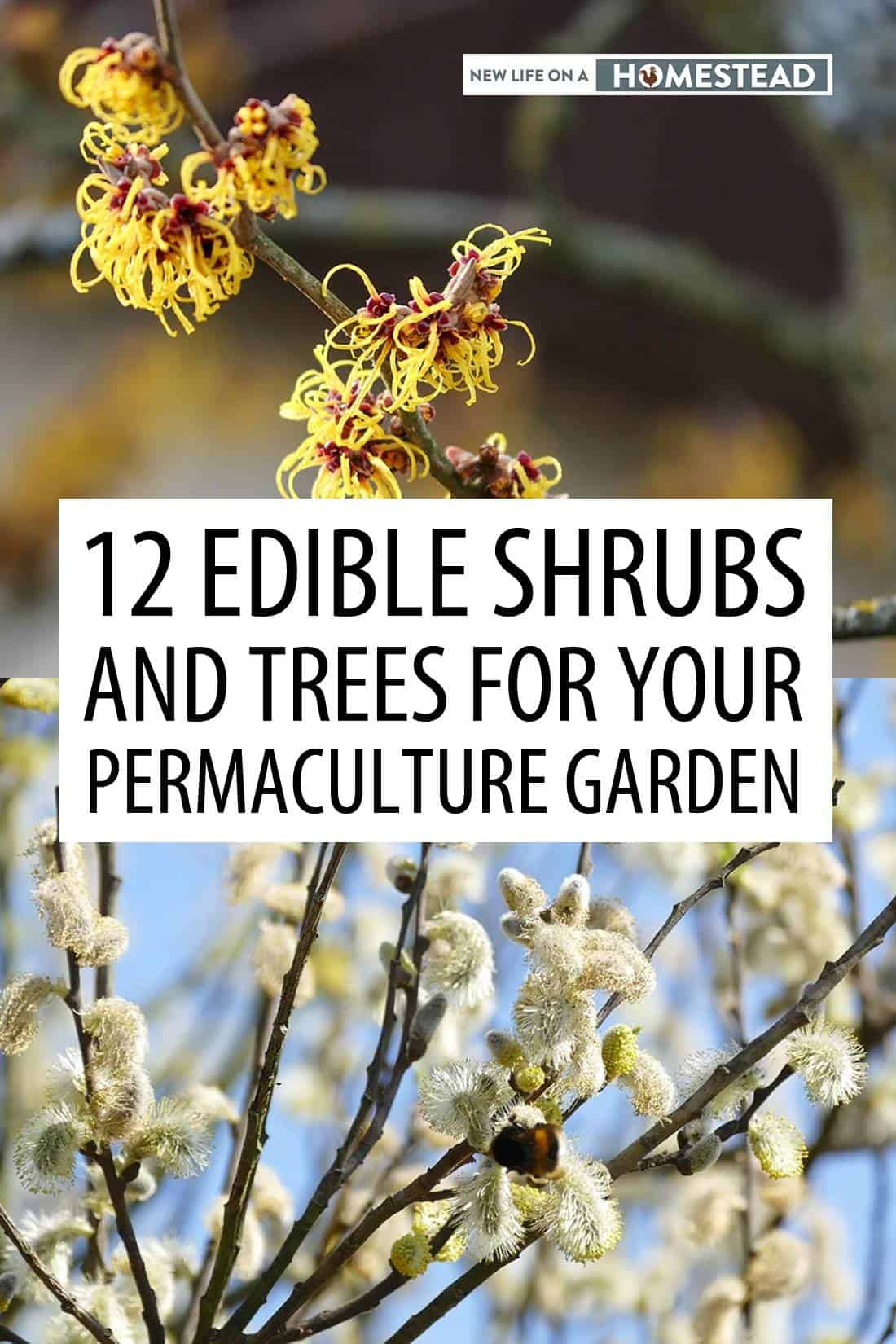 permaculture trees pinterest