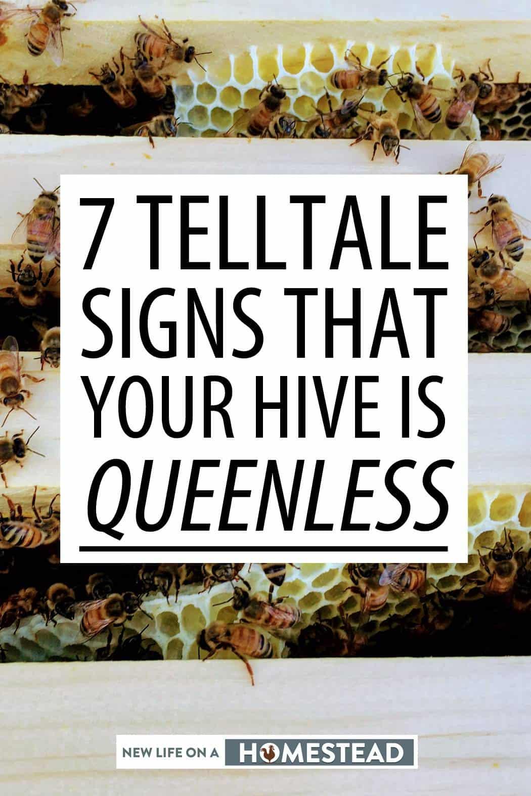 queenless hive pinterest