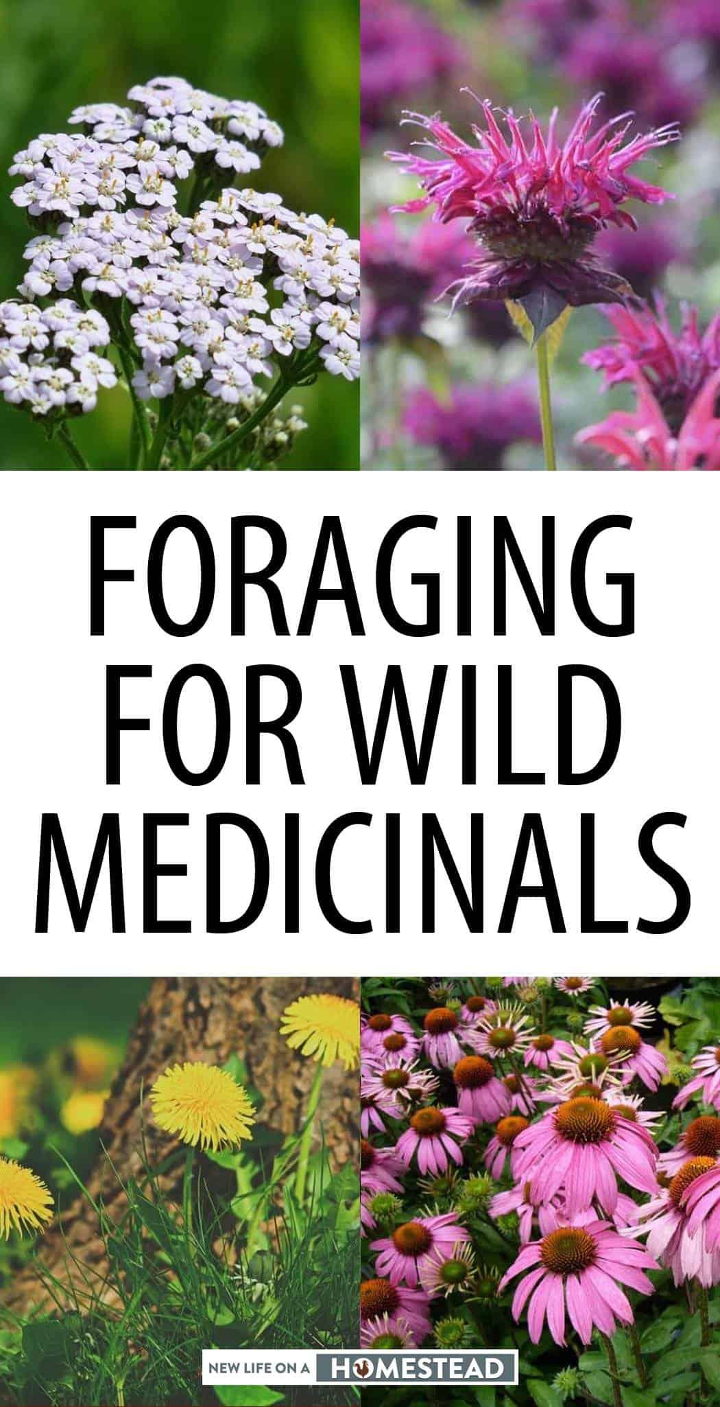 wild medicinals foraging pinterest