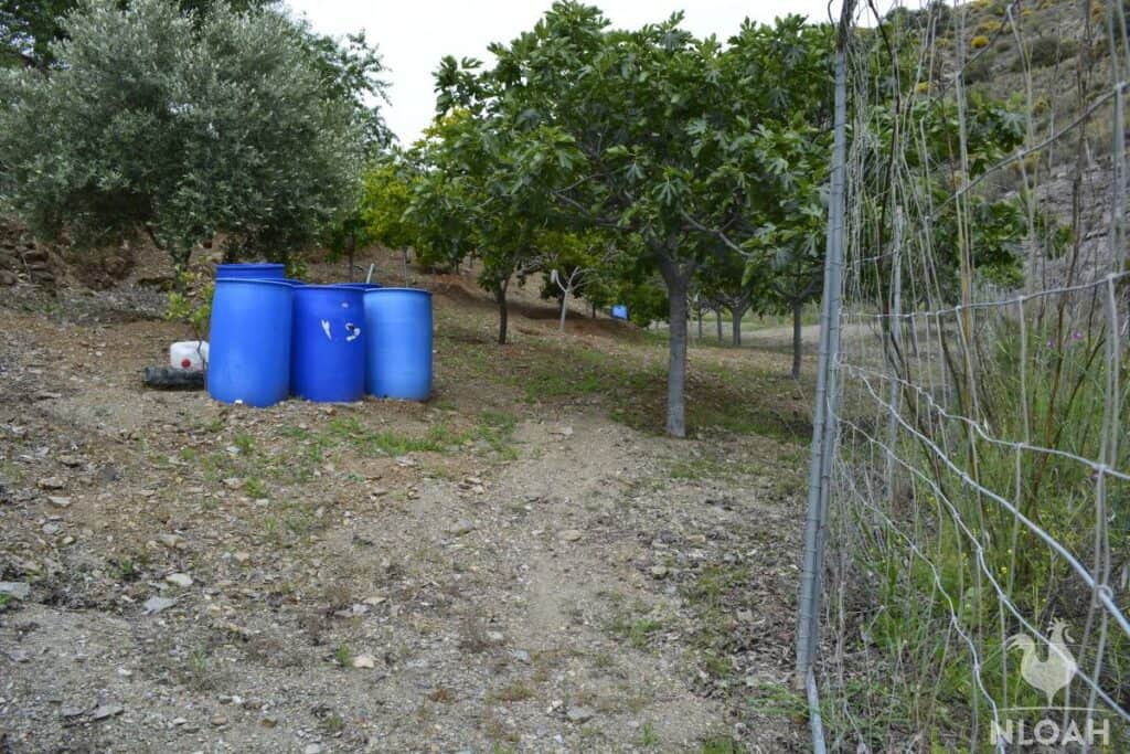 orchard with citrus fruit trees and some rain barrels