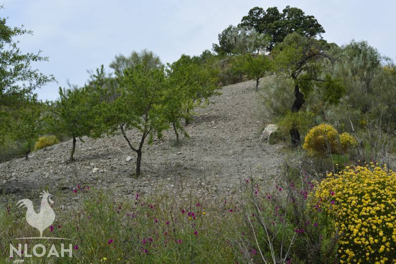 rocky and steep terrain fine for trees no good for crops