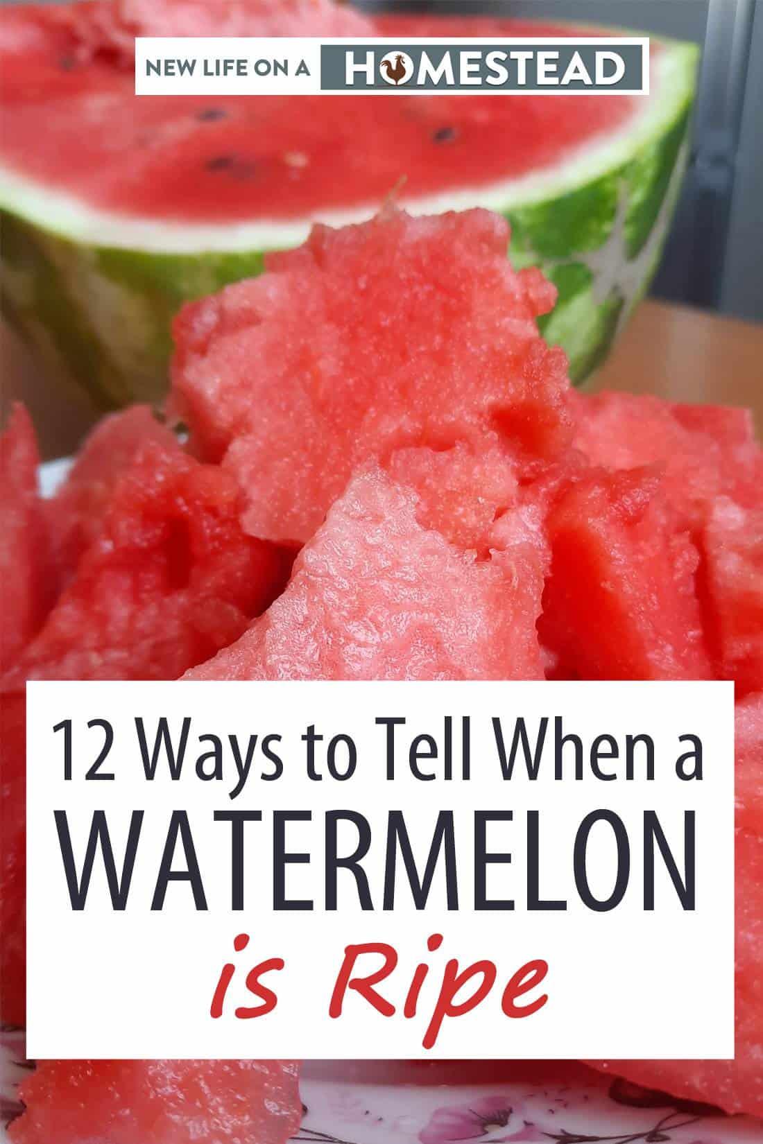 watermelon ripeness Pinterest image