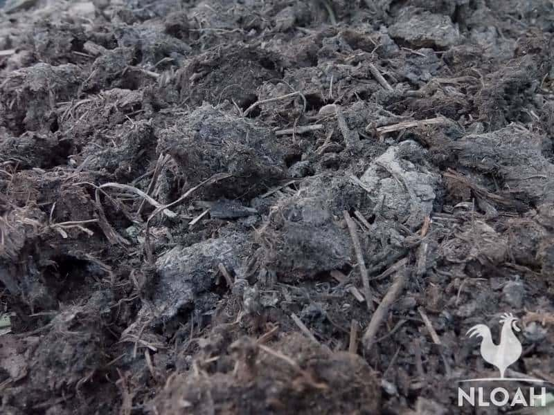 aged goat manure mixed with compost