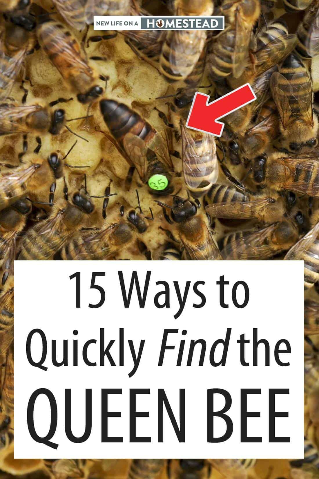 finding the queen bee Pinterest