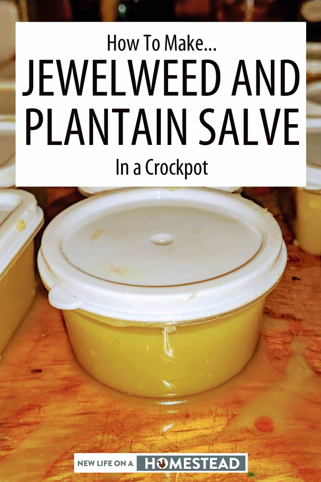 jewelweed and plantain salve pinterest