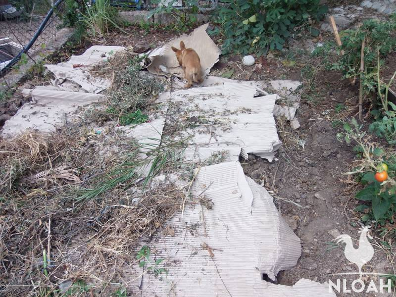 permaculture garden with cardboard mulch