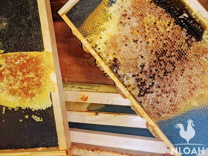 beehive frames with combs and honey