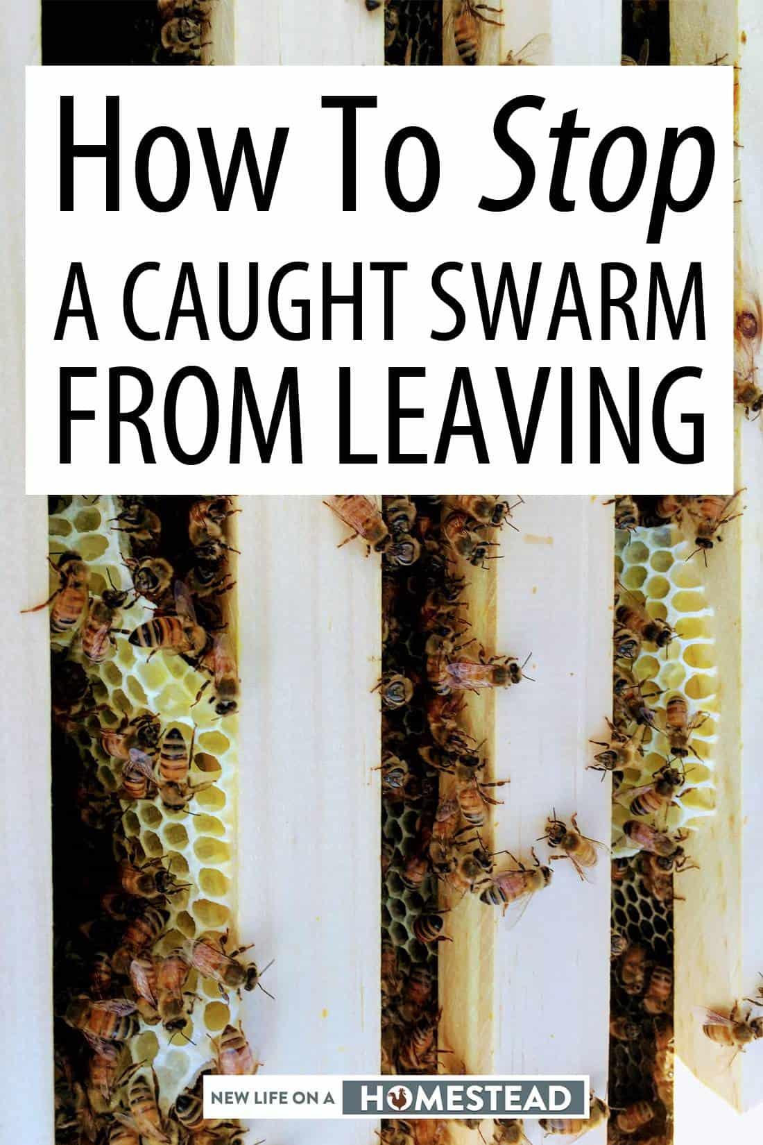 bees in beehive Pinterest image